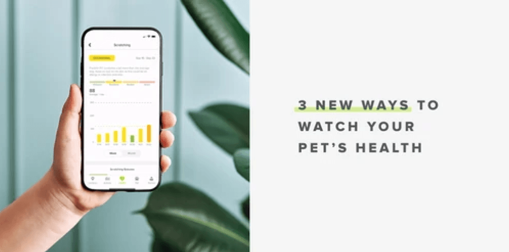 Three New Ways to Watch your Pet's Health | Whistle