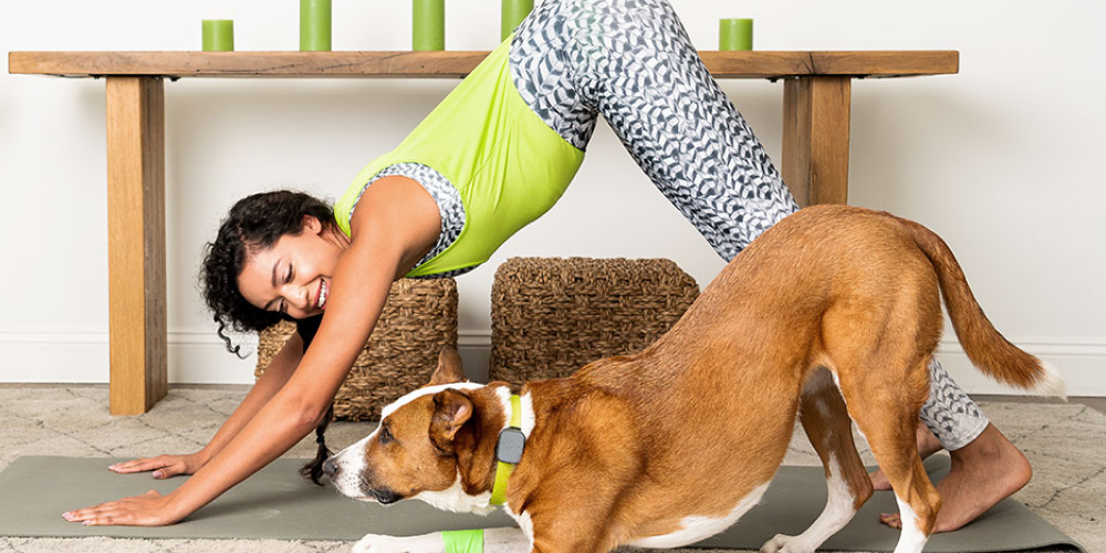 Tips for Getting Fit with Your Pet | Whistle