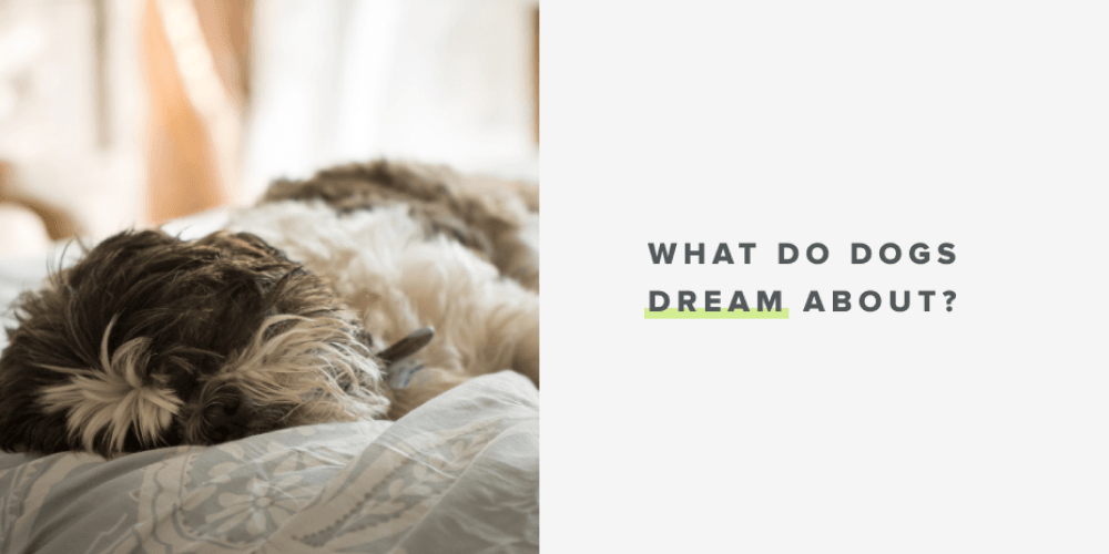 What Do Dogs Dream About? | Whistle