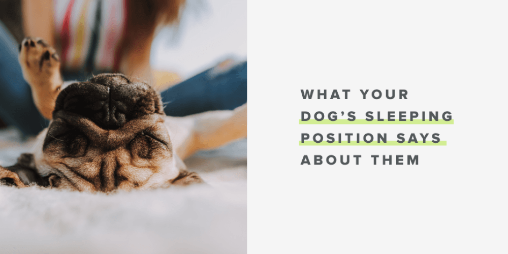 What Your Dog's Sleeping Position Says About Them | Whistle