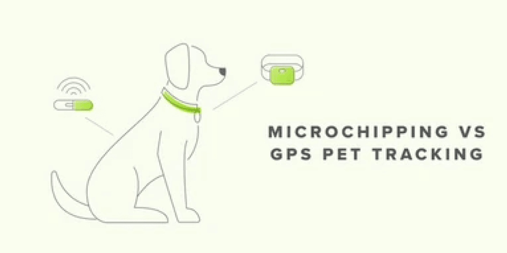Which is Better – the Microchip or the Tracker? | Whistle
