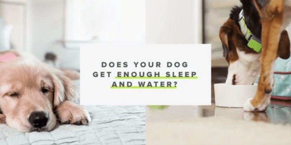 Why Should You Monitor Your Dog's Sleeping and Drinking Habits?  | Whistle