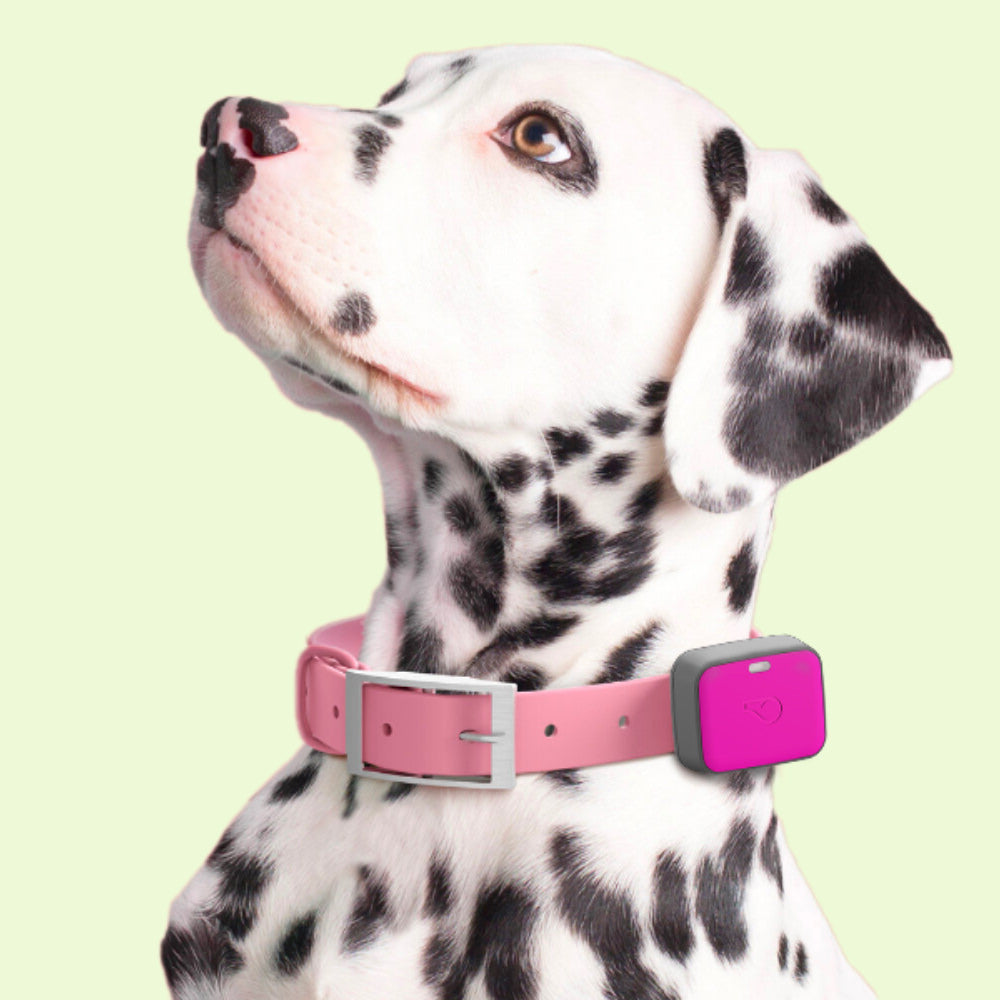 Whistle dog trackers achieve fitness goals based on breed, age, and weight. Track your pet's calories burned, distance traveled, minutes active, and more. Earn badges for milestones.  Be sure they're getting the right amount of exercise