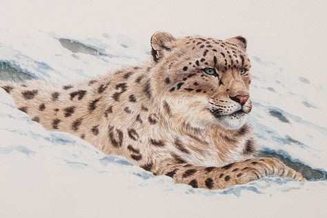 Snow leopard ©Keith Brockie