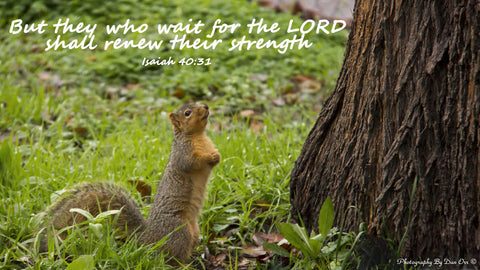 They Who Wait On The Lord Inspirational Christian Bible Verse Photo