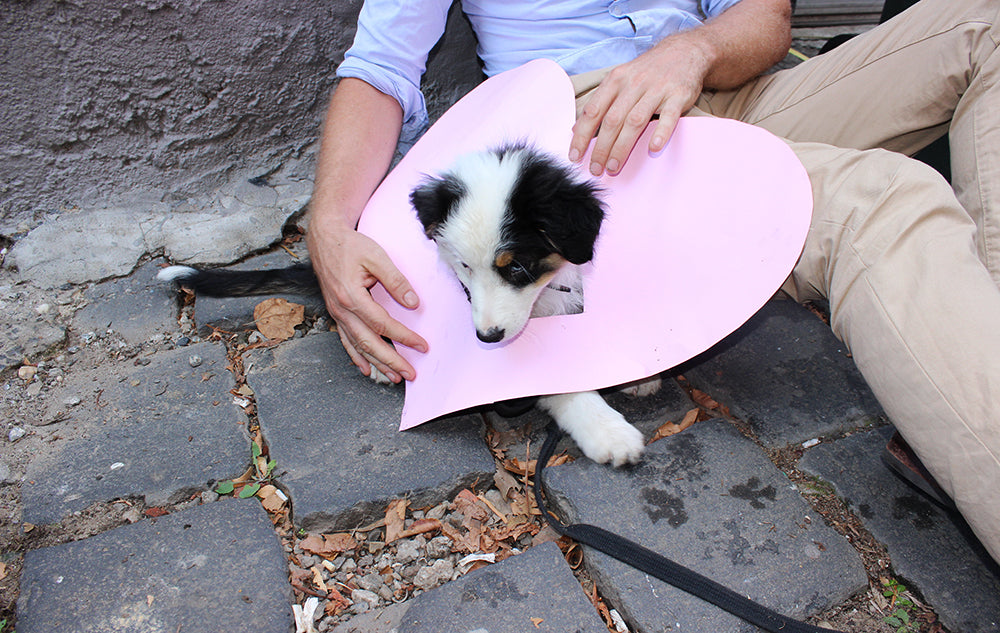 puppy in a heart