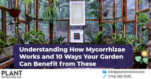#12 - Understanding How Mycorrhizae Works