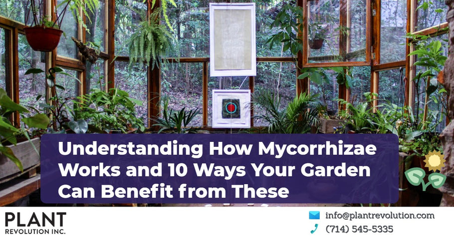 Understanding How Mycorrhizal Works and 10 Ways Your Garden Can Benefit from These
