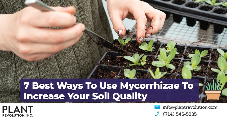 7 Best Ways To Use Mycorrhizae To Increase Your Soil Quality