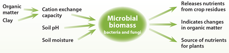 2-Factors-affecting-microbial-biomass