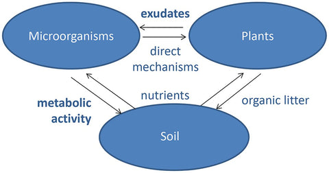 2-Interactions-between-microbes-soil-and-plants