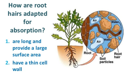 #7-How Fertilizers affect root uptake of minerals
