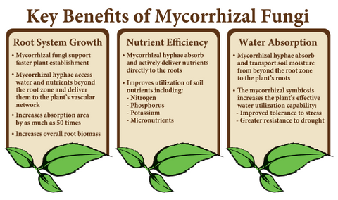 #7 - Benefits of Mycorrhizal Fungi in Agriculture