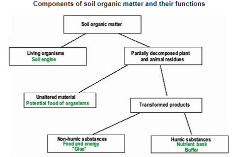 #8-Importance of Organic Matter in Soil Quality