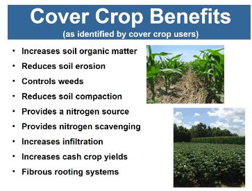 #8 - Importance of Cover Crops