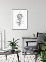 Sunflower line drawing print wall art by Deni Minar for plant lovers