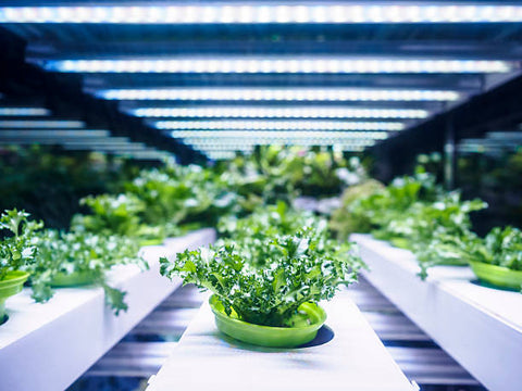 Hydroponics is the process of indoor growing without soil