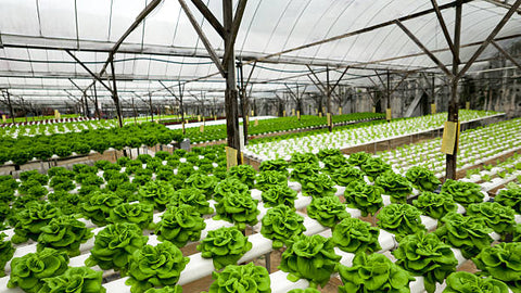What is Hydroponics?- A simple introduction.
