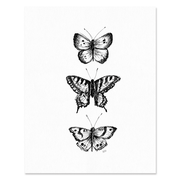 Butterfly Trio - Print
