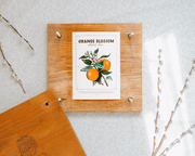 Orange Blossom - Print