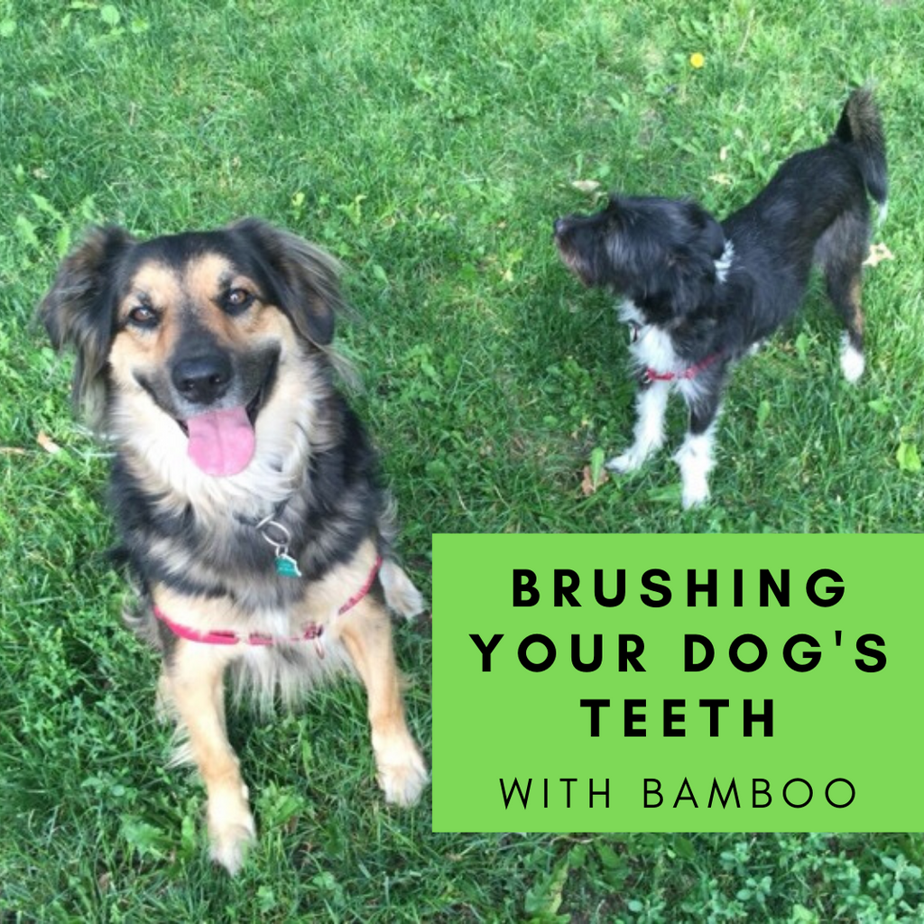 How To Brush A Dog's Teeth - Using A Bamboo Toothbrush