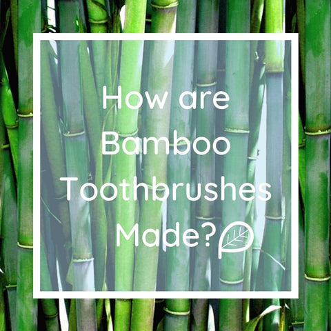 Life Of A Bamboo Toothbrush