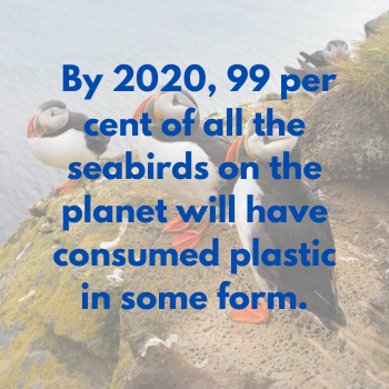 "mamap bamboo toothbrushes meme "" by 2020, 99 per cent of all the seabirds on the planet will have consumed plastic in some form"""