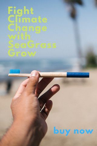 Why Seagrass and Bamboo Brushes Help To Combat Climate Change