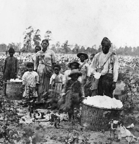 slavery in the united states - picture of slaves working in a cotton field - juneteenth is when slaves became free