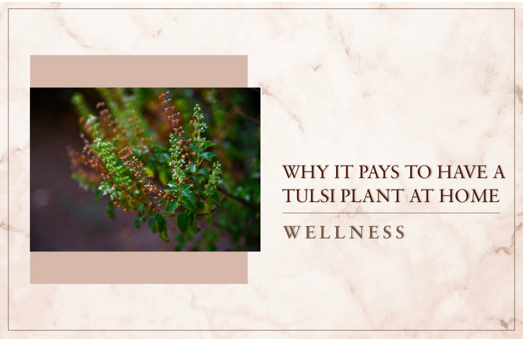 Why it pays to have a tulsi plant at home
