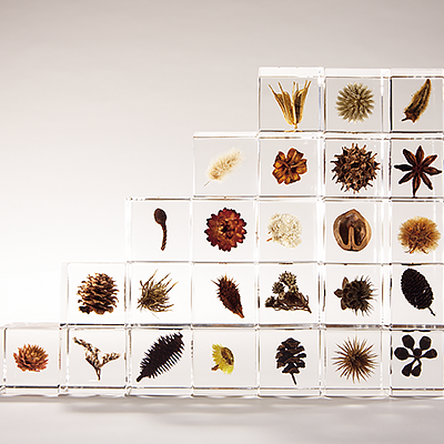 Sola Cube with Dried Plants