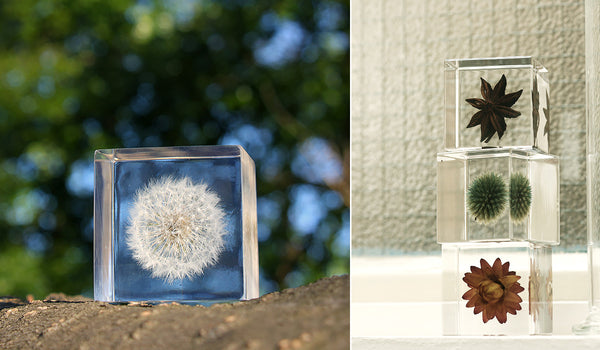 Sola Cube Showcases with Plants