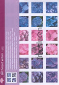 Vellum Hydrangea 3 colours (5 sheets)