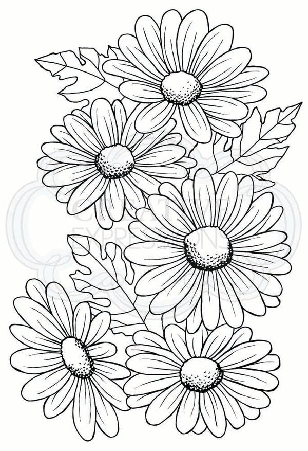 Woodware Clear Singles Five Daisies 4 in x 6 in Stamp