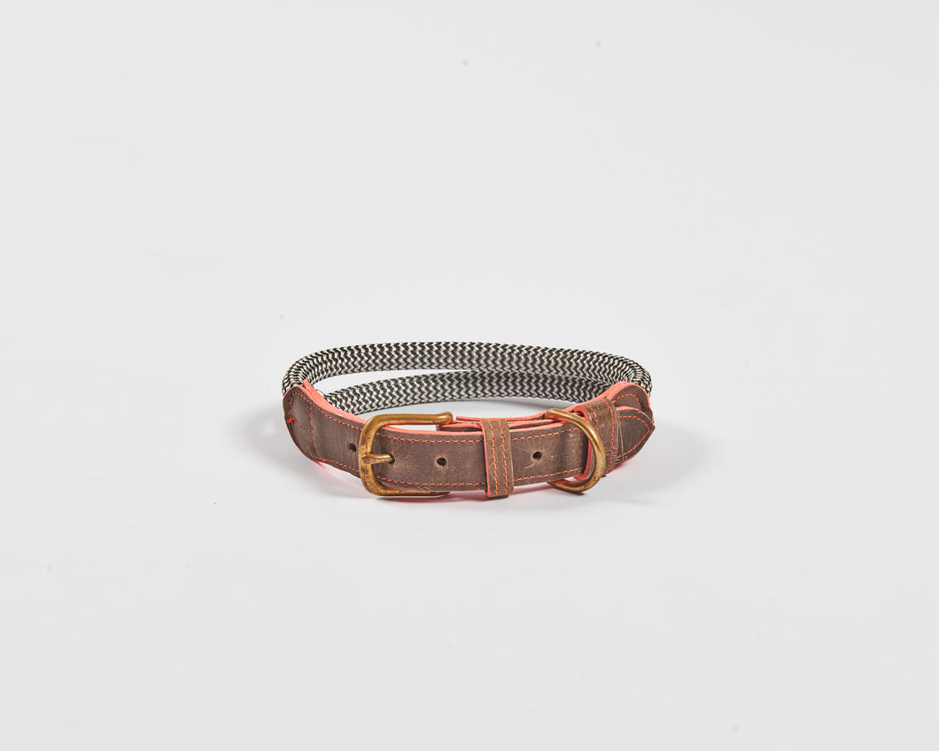 Chommies Medium Dog Collar in Coral