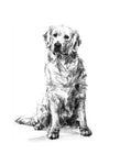 SOLD Golden Retriever Charcoal sketch ORIGINAL