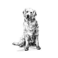 Golden Retriever Sketch Print