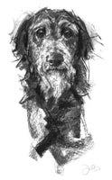 Lurcher Portrait Charcoal sketch ORIGINAL
