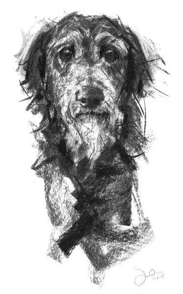 """Aristotle"" Lurcher Portrait Charcoal sketch ORIGINAL"