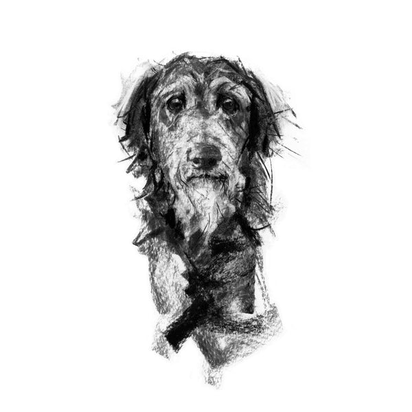 """Wisdom"" Deerhound Sketch Print"