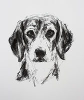 SOLD Beagle Portrait Charcoal sketch ORIGINAL drawing
