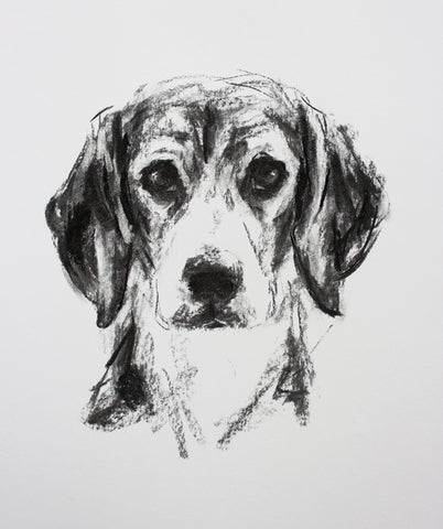 Beagle Portrait Charcoal sketch ORIGINAL drawing