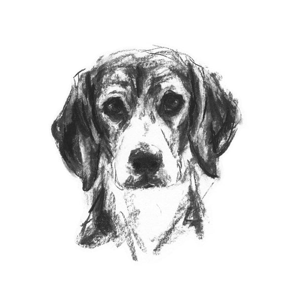 Beagle Portrait Sketch Print