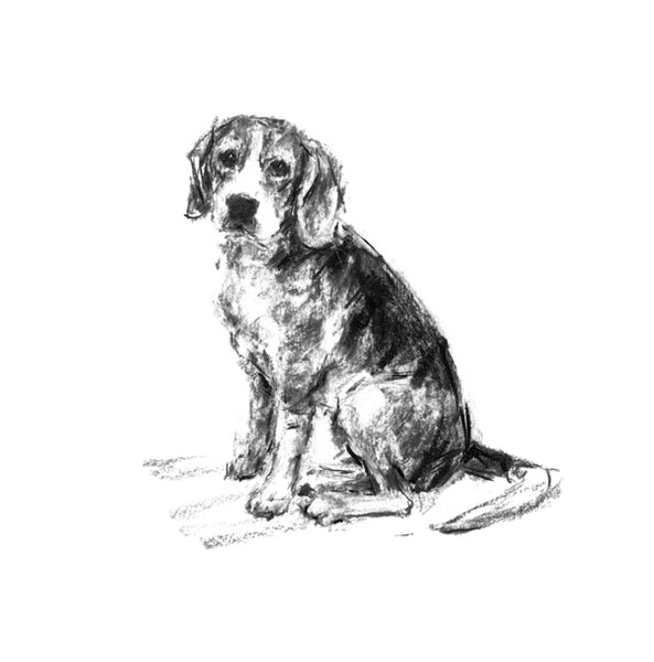 Beagle Sitting Sketch Print
