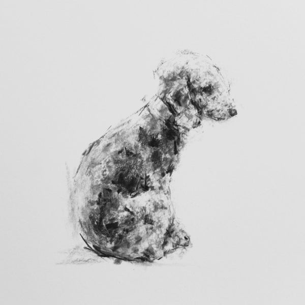 SOLD Bedlington Terrier Charcoal sketch ORIGINAL