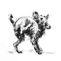 "SOLD Terrier ""The Impossible Itch"" Charcoal sketch ORIGINAL"