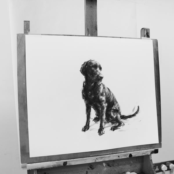 Large Labrador sketch, Charcoal on paper - Original Dog Drawing