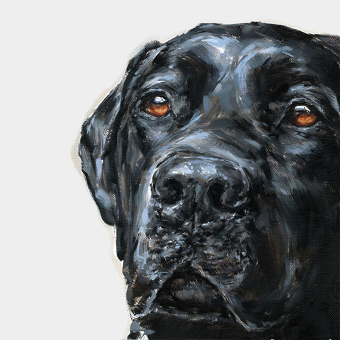 2. Black Labrador Limited Edition Print
