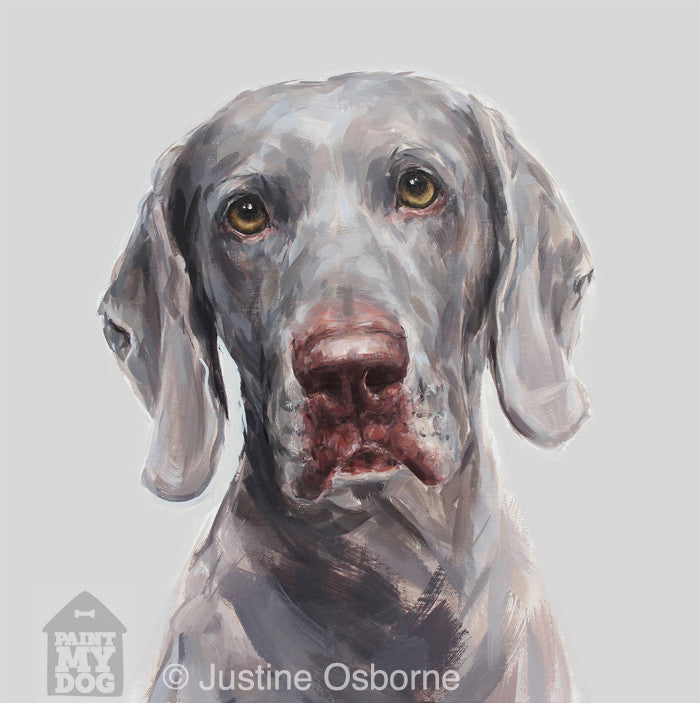 """Shadow"" Weimaraner Limited Edition Print"