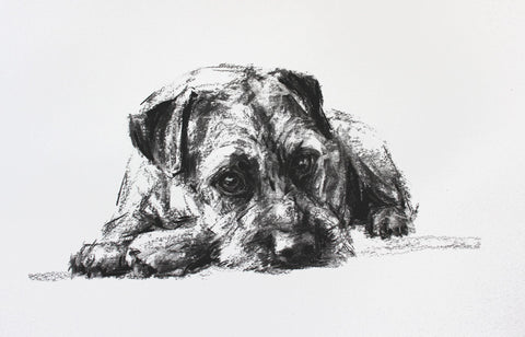 Border Terrier Lying Down Charcoal sketch ORIGINAL